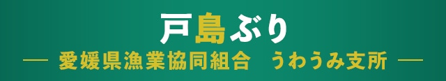 戸島ぶり 愛媛県漁業協同組合 うわうみ支所
