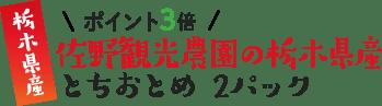 栃木県産 \ポイント3倍/ 佐野観光農園の栃木県産 とちおとめ 2パック