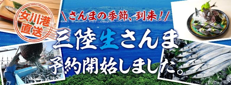 女川港直送 さんまの季節、到来!三陸生さんま 予約開始しました。