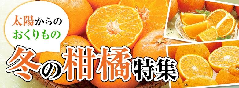 冬の柑橘特集