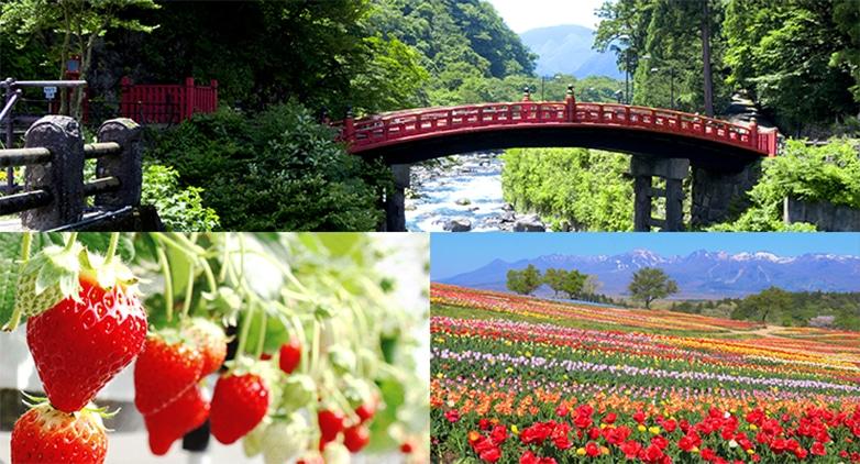 栃木の風景