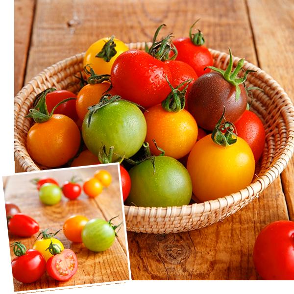 ワンダーファーム トマトの宝石箱 1.6kg